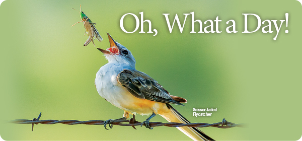 Wild Birds Unlimited Calendar